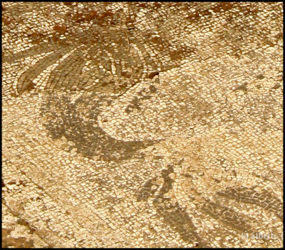 Archaeological Thermal Bath Complex at Via Terracina - Detail fo the Dolphin in the Apodyterium