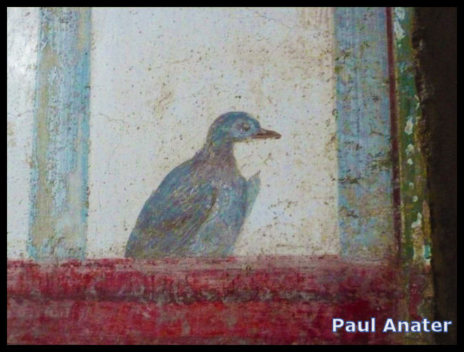 Fresco, pigeon on a ledge, Stabian Villas