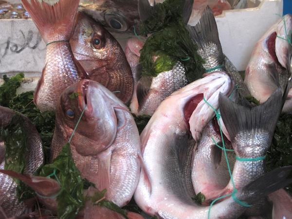 Fresh Spigola at the Fishmonger in Chiaia