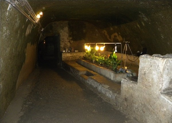 undergroundbotanicalgarden