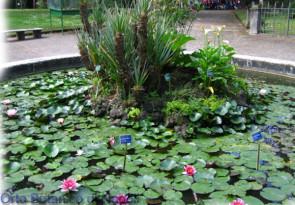 Orto Botanico – Naples Botanical Gardens