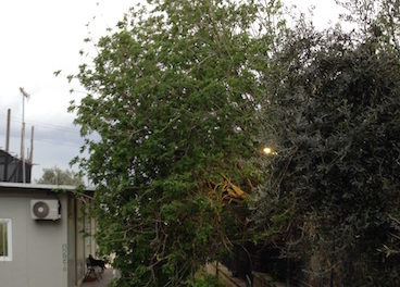 Stabia's Villa Arianna Closed to Public Until Tree is Removed